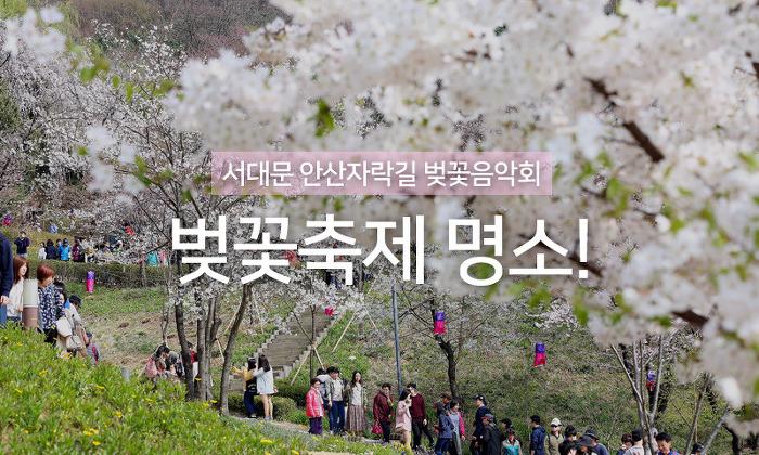 2018 서대문 안산자락길 벚꽃음악회! 벚꽃축제는 서대문 안산에서~