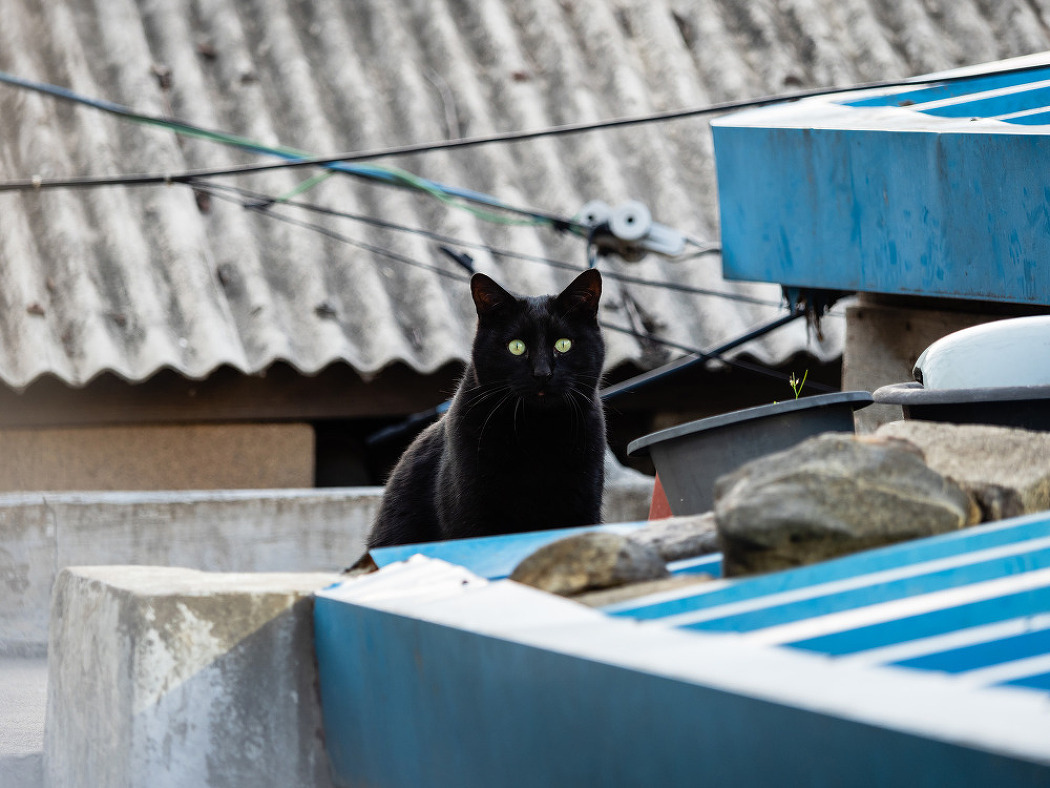 거리의 고양이 7/Cats in the street 7