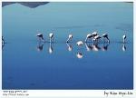 [적묘의 볼리비아]플라밍고(flamingo),홍학을 만나는 우유니,laguna