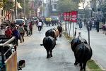 인도여행- 바라나시(Varanasi) 가는 길, 카주라호(Khajuraho)에서