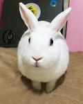 [토끼밥] 토끼먹이로 좋은 국화꽃잎!