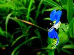 시골의 여름꽃