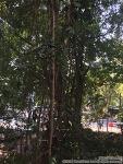 [치앙마이-2016]치앙마이에서 일만하고 있습니다.[Day29](17FEB16)