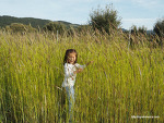 익어가는 스페인 고산의 밀밭 산책