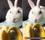 토끼한테 바나나 먹여도 될까?