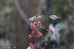 범어사 동박새와 곤줄박이들 (다중사진)