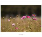 #01. 당수동 시민농원 풍경