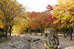 부천 중앙공원 가을단풍 풍경
