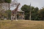덴노지 동물원(Tennoji Zoo)#4