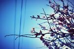 꽃송이가 꽃한송이가~