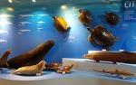 6월 제주 여행으로 바다의 생물을 찾아가는 제주해양동물박물관