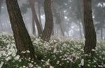 구절초가 있는 숲