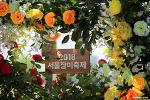 중랑천 장미축제 방문 후기 | 서울 가볼만한곳