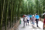 울산여행-십리 대숲과 대왕암공원