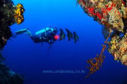 Bat fish & Diver, Sipadan, Malaysia