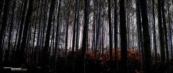강원도 인제 원대리 자작나무 숲에서 신선한 공기를 마시고 오다. ㅋㅋㅋ
