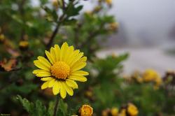 꽃보다 아름다운 보석같은 이슬 - 경기도 여주