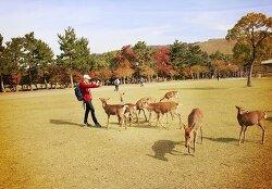 오사카 여행 3일차, 나라공원에서 사슴들과 무한 데이트