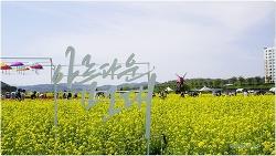 아름다운 낙동강변 남지 유채꽃 풍경