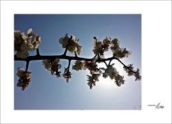 봄기운을 이제서야...