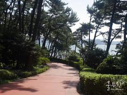바다가 보이는 산책로 동백섬!