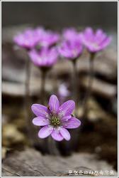 충남 아산 광덕산 야생화