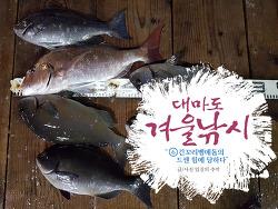 대마도 낚시(6), 긴꼬리벵에돔의 드센 손맛
