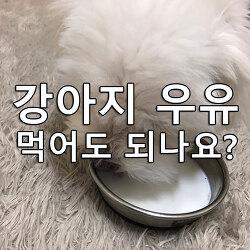 강아지 소화가 잘되는 우유 추천!