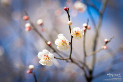2016 영종도의 봄 [a850 + 135.8za]