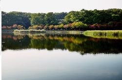 가을, 분당 율동공원을 걷다.[중편]