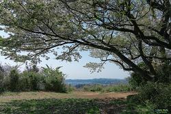 가마쿠라(鎌倉) 키누바리야마 (衣張山,きぬばりやま)