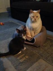 [고양이짤 jpg] 집사야 이 고양이 좀 치워죠
