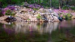 거창 봄,가을(수달래, 단풍)