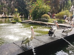 동물보다 사람이 더 많은 자카르타 '라구난 동물원(Ragunan Zoo)'