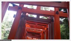 오사카 여행 3일차 -  교토 후시미이나리신사(여우신사)