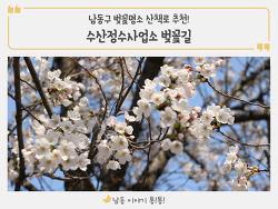 남동구 벚꽃명소 수산정수사업소 벚꽃길 산책