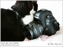 [적묘의 카메라]캐논,EOS 6D Mark II, EOS 650D,흔한 고양이 베게