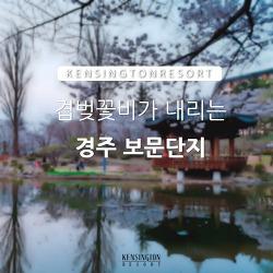 [경주] 보문관광단지 벚꽃축제