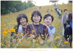올림픽공원 들꽃마루 황화코스모스 꽃길을 걸으며 - 주연.향이.혜영