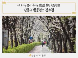 남동구 벚꽃 명소로 손꼽히는 아름다운 스팟! 장수천 나들이