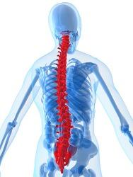 척추골반교정 전척추와 골반까지