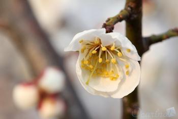 봄이 오는 모습