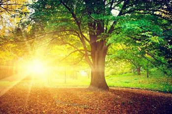 <아침을 바꾸는 13가지 사소한 행동>