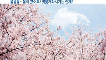 봄봄봄~ 봄이 왔어요! 벚꽃개화시기는 언제?