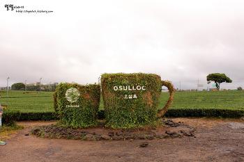 [제주] 초록 녹차밭 ::오설록티뮤지엄&이니스프리제주하우스
