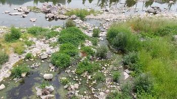광려천 오염과 미나리·노랑꽃창포 심기