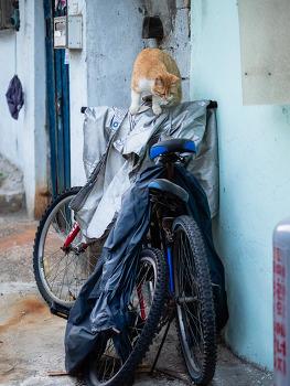 거리의 고양이 11/Cats in the street 11