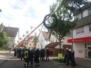 독일의 유명한 나무 꼽기 전통 축제