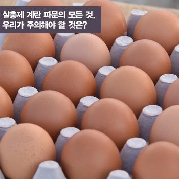 살충제 계란(달걀) 파문의 모든 것. 우리가 주의해야할 것은?