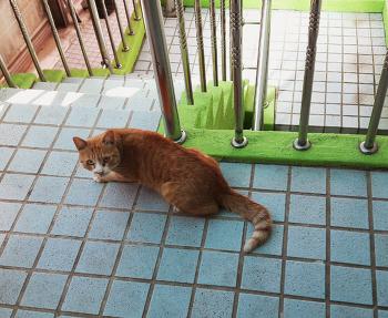 고양이사진
